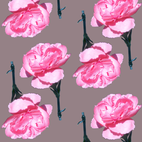 Pink Carnation fabric by pond_ripple on Spoonflower - custom fabric