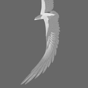 Eagles 8, L