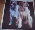 Rrrirish_wolfhound5_comment_115599_thumb