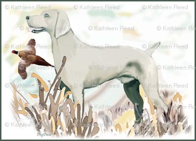 Hunting weimaraner and phasant