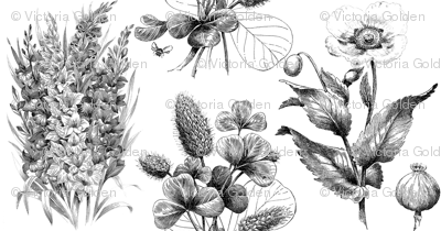 Sketched FLowers