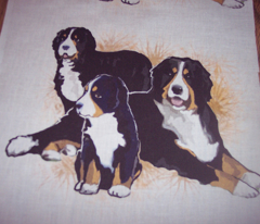 Bernese Mountain Dog Trio