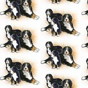 Rrrbernese_mountain_dogs2__shop_thumb