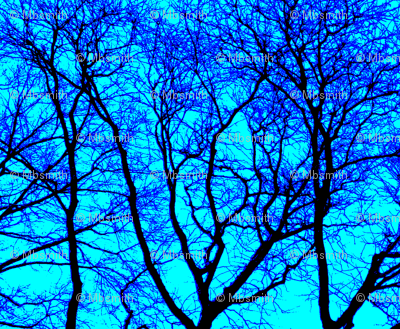 Blue-eyed Forest Plaid