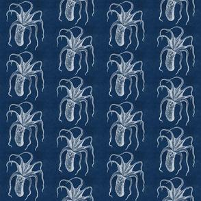 octopus blue