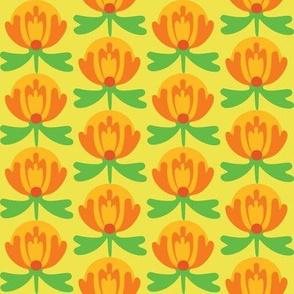 lilli_citrus