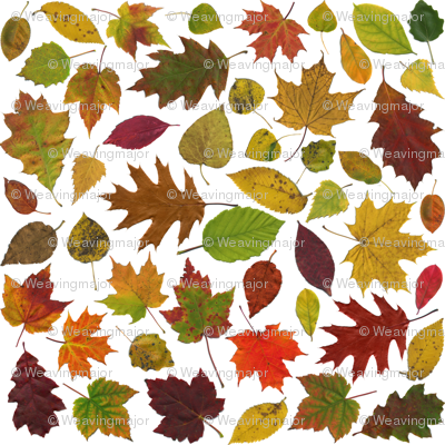 life-sized autumn leaves on white