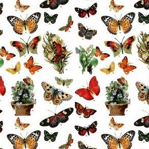 Victorian butterflies