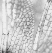 Dragonfly_Pattern