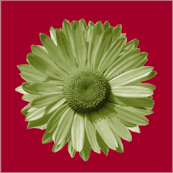 Sofa daisy in red