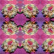 Fringe Flower in Fucshia
