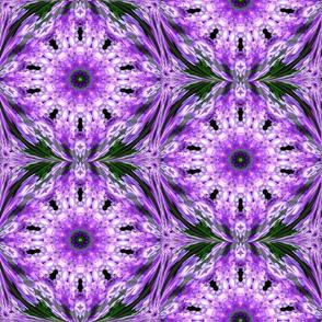 Lavender beauty.