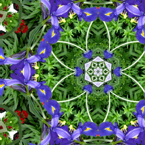 Blue Iris shapes.