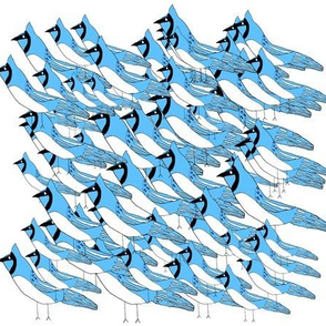 Flock of Blue Jays