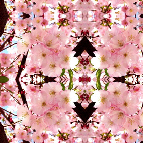 apple_blossoms_VERY_BIG