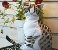 Rrrrrrro_lovely_pussy_rgb_plus_comment_127294_thumb
