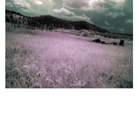infrared fabric by ravynka on Spoonflower - custom fabric