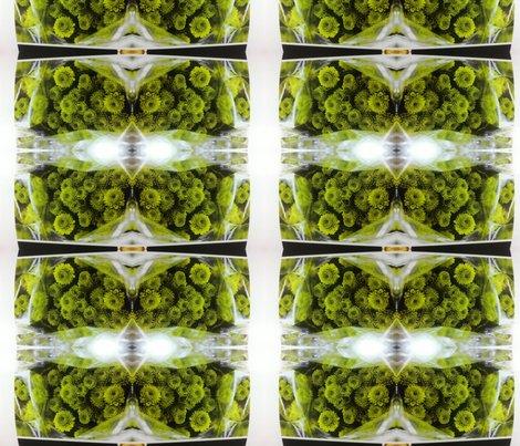 Rrimg-20111023-wa0030_shop_preview
