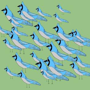 Larger Blue Jay Flock