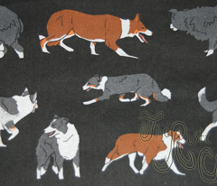 Herd of working Border Collies - black