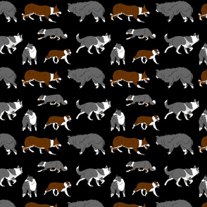Herd of working Border Collies - black
