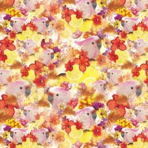 sparkling kakadus