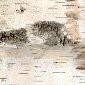 Rrrrrbirch_panoramawhitecrop2_shop_thumb