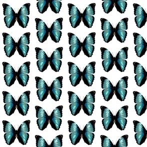 fabricPicture_69v1