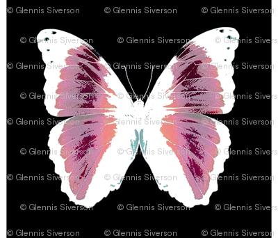 pink butterflies on black