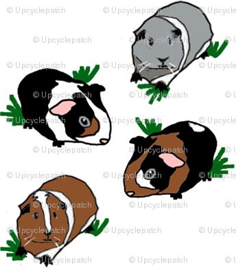 Medium Guinea Pigs - Stripe