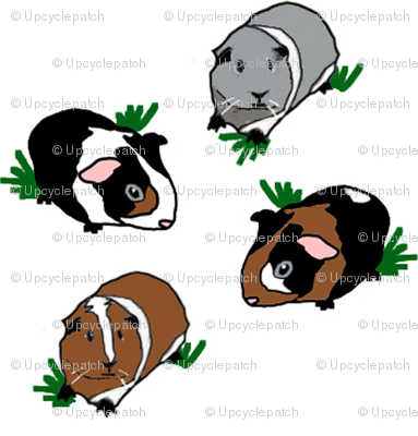 Medium Guinea Pigs