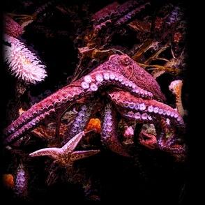 Kraken 54