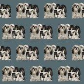 Rrrtibetan_terriers_shop_thumb