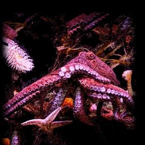 Kraken 40