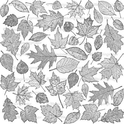 small B&W leaf etchings