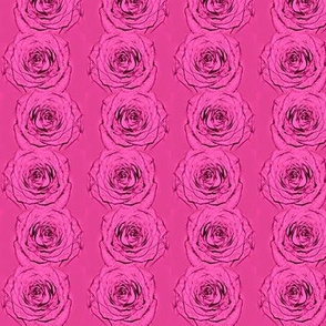 Blooming Roses in a Line