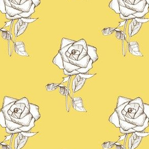 White Rose on Yellow