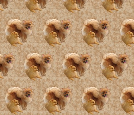 Rrrpomeranians2__shop_preview