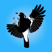 Magpies: learn to fly by Su_G