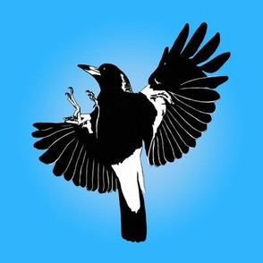 'Bird of the Year' Magpie learns to fly, by Su_G