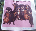 R856174_rdachshund_grouping_comment_126314_thumb