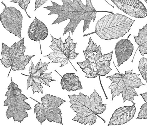 leaf etchings - black and white fabric by weavingmajor on Spoonflower - custom fabric