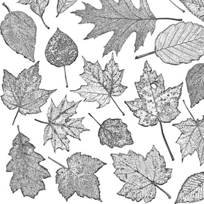 leaf etchings - black and white