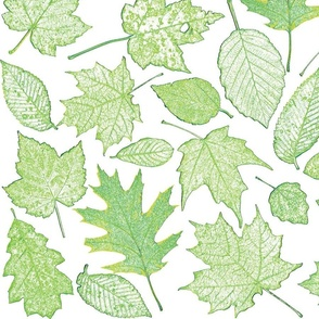 leaf etchings in green