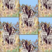 Rrgerman_wirehaired_pointers_shop_thumb