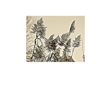 Rgrasses-dhb_shop_preview