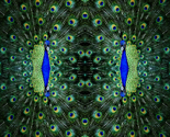 Rrpeacock-head-fabric_thumb