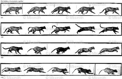 Muybridge's Cats