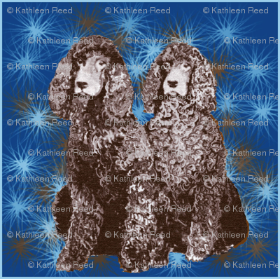 Irish Water Spaniel Stars