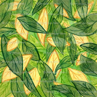 Chile Pepper Leaf